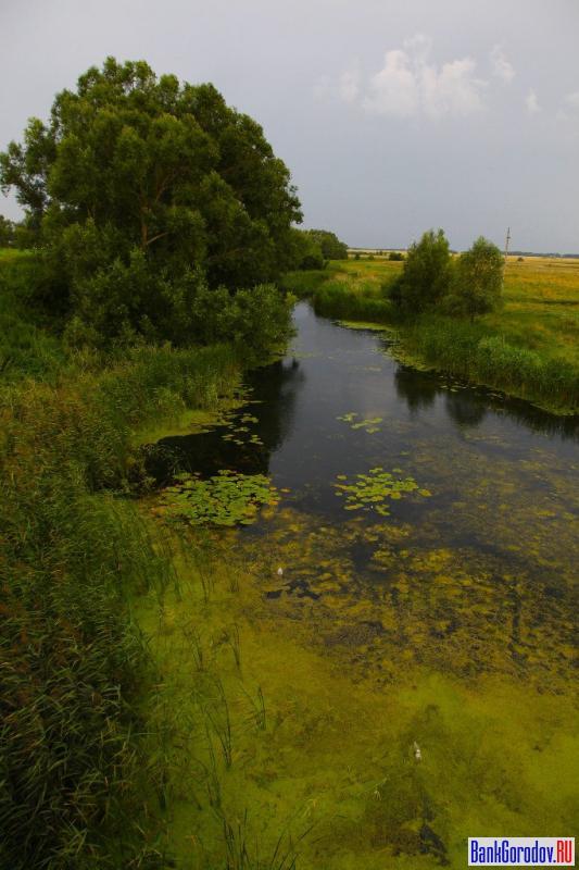 рецепты река лесной воронеж фото залез